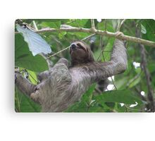 Sloth Climbing Canvas Print