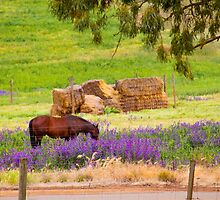 Of horses and hay by indiafrank
