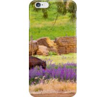 Of horses and hay iPhone Case/Skin