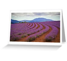 Lavender Contours - Bridestowe Estate, Tasmania Greeting Card