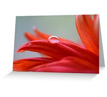 Clear Red Drop Greeting Card