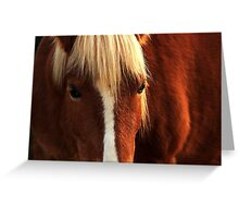 Haflinger Happiness Greeting Card