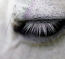 My my…tis a horse's eye by Clare Colins
