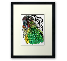 Green Cheeked Conure Framed Print