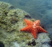 Starfish by cclaude