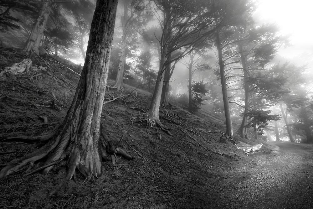 Lighted Wood by Richard Mason