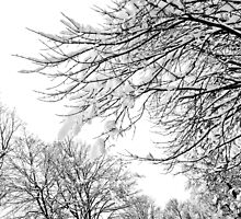 Snowy Limbs by Susan See