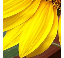 Sunflower 2 Photographic Print
