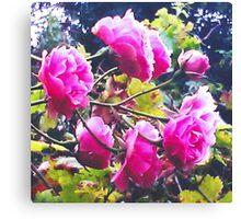 Montsalvat Roses Canvas Print