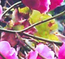 Montsalvat Roses Sticker