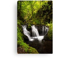Forest Water Canvas Print