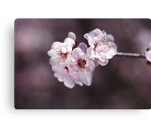 Over a Blossom Cloud Canvas Print