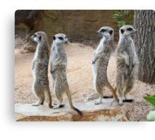 Every Which Way - Meerkat Sentries Canvas Print