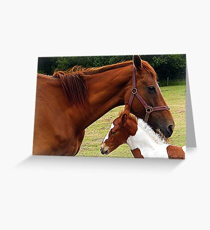 Mother and Foal Greeting Card
