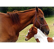 Mother and Foal Photographic Print