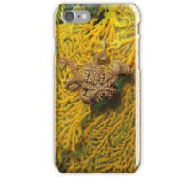Basket star iPhone Case/Skin