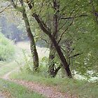 Morning path by Patrick Morand