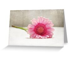 Softness in Pink Greeting Card