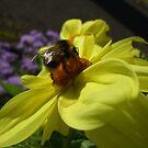 Big Bumble Bee by Babz Runcie
