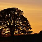 Sleepy Sunset by Georgie Hart