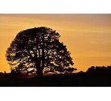 Sleepy Sunset Photographic Print