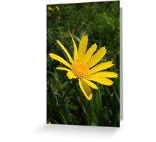 yellow daisy - wildflower bank Greeting Card