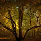 Autumn Enchantment by shutterbug2010