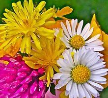 BURST OF COLOUR by Colleen2012