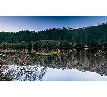 mangrove reflex Photographic Print