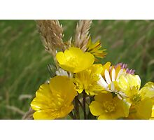 IRISH BUTTERCUPS Photographic Print