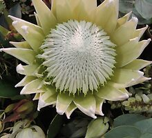 White Protea by ScenerybyDesign