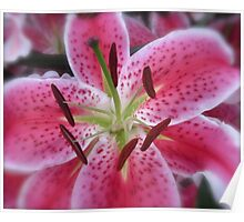 PINK LILY MACRO Poster