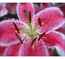 PINK LILY MACRO Photographic Print
