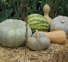 Pumpkin Patch by ScenerybyDesign