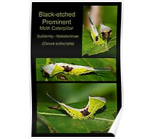 Black-etched Prominent Moth Caterpillar Poster