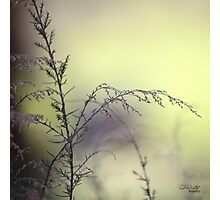 My Gate of Grass Photographic Print