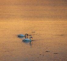 Evening Stroll by ChocChipCookie