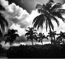 Miami Palm Trees by StgSixx