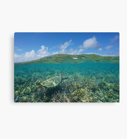 Above and below water sea turtle and coral reef Canvas Print