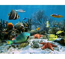 Coral reef and starfish Photographic Print