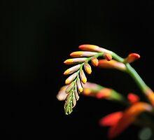 Orange Summer Flower by Lozzar Flowers & Art