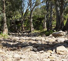 Dry creek. by Steve9