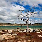 The Eucumbene Tree by David Haworth