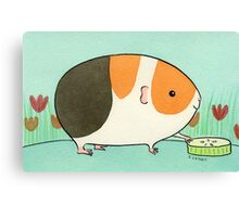 Tri-Color Guinea-pig with a Slice of Cucumber Canvas Print