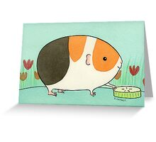 Tri-Color Guinea-pig with a Slice of Cucumber Greeting Card