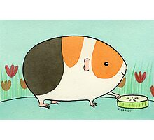 Tri-Color Guinea-pig with a Slice of Cucumber Photographic Print