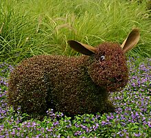 """He's just a little """"hare-y"""" by Scott Mitchell"""