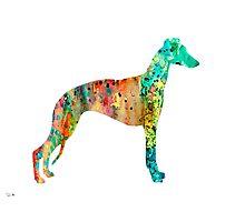 Greyhound Photographic Print