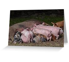 Lunchtime for Piggies Greeting Card
