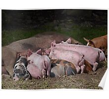 Lunchtime for Piggies Poster